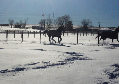 Little Raven Ranch - Horses Love Snow!